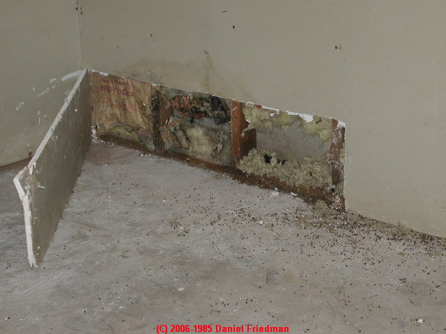 Finog Environmental Pictures Of Mold