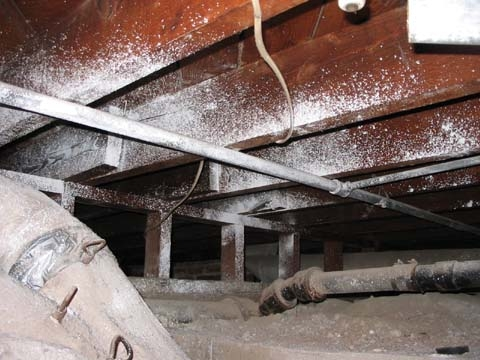 Finog environmental pictures of mold for Building a crawl space